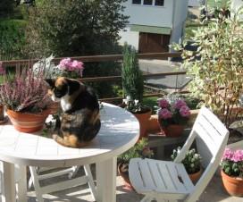 terrasse fleurie en automne 2