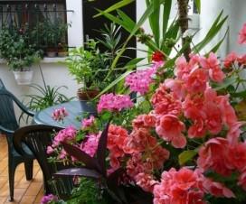 terrasse bien fleurie 1