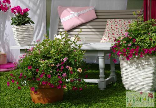 terrasse fleurie hiver 4